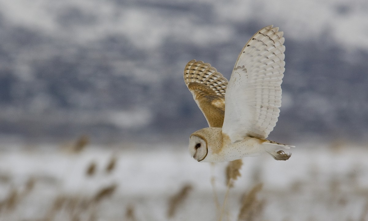 Owls Archives | All The Animals of the World in One Place